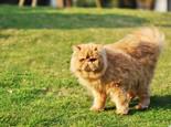 猫咪尾巴姿势大揭秘