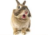 兔子七个动作不得不注意
