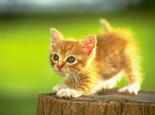 掌握正确方法训练好你的猫咪