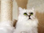 哪些东西对猫咪有害