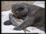 如何训练猫咪不吃蟑螂