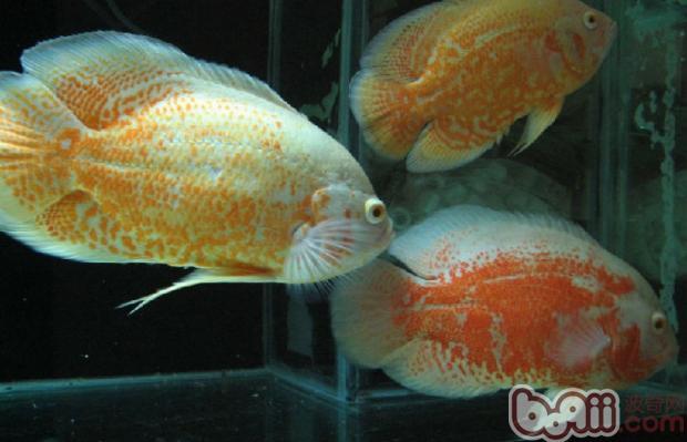 如何减少鱼类寄生虫