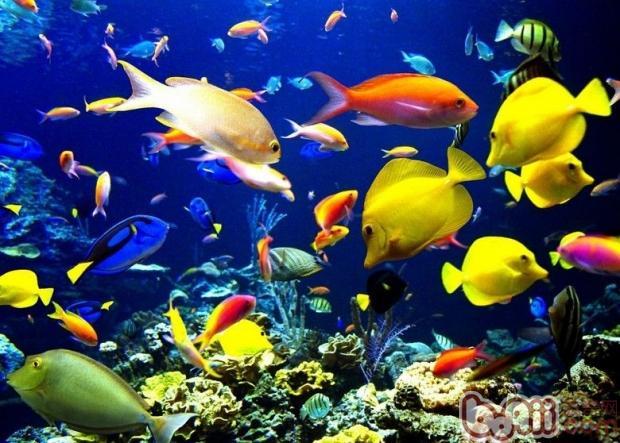 热带鱼混养的注意事项图片