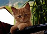 培养猫咪好性格的四个妙招