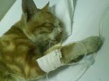 面对猫老龄化需预防的疾病