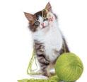 必威体育appios毛球形成的原因及预防措施
