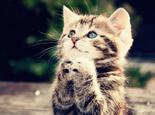 为什么猫天生是捕鼠高手