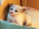 常见猫咪腹泻的原因及治疗办法