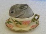 解密兔兔的刨料行为