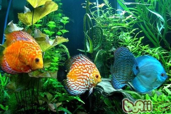 壁纸 动物 水草 水生植物 鱼 鱼类 564_375
