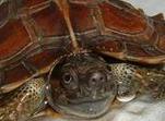 太阳龟的饲养环境