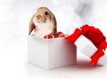 训练兔兔养成回笼习惯