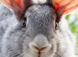 纠正兔兔的坏习惯