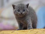 如何正确喂养幼猫