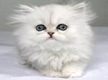 如何预防猫咪中毒