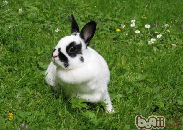 qq飞车宠物兔美进化图