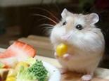 夏天给鼠鼠开胃的一些方法