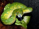 关于宠物蛇的11个误会