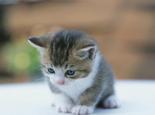 吃什么让幼猫健康的成长