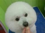 夏天我的爱犬不愿遛弯了,是太热了还是潜在疾病?