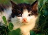 教你如何根据猫咪花色起名字