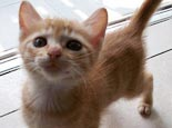 怀孕了可以帮猫换猫砂吗