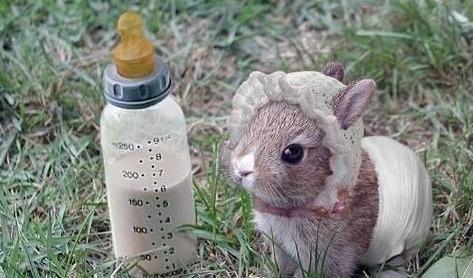 兔子可爱的外表已经成为很多人心中的理想宠物,家长们在购买的时候