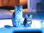 5个方面挑选最适合你家的猫粮