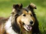 狗狗难产时的应对方法