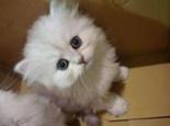 猫咪的各种动作表情介绍
