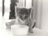 12个问题测试你是否是个称职猫奴