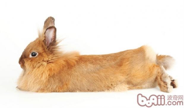 给兔兔洗澡的注意事项图片