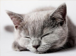 猫咪最讨厌的事情有哪些