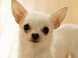 关于犬瘟热的早期症状有哪些