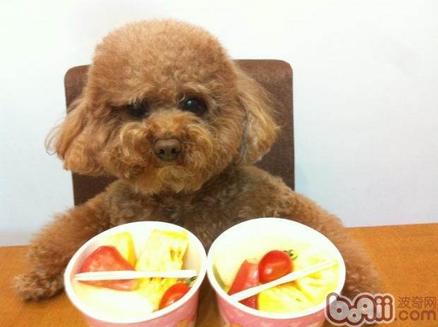 几种对狗狗致命的水果介绍