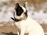 营养不均让狗狗有皮肤病