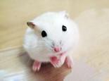 如何预防仓鼠挑食