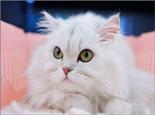 家庭养猫的日常护理及清洁
