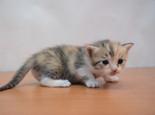 新手养猫,常见的食物危害须知