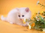 猫咪饲养的几大禁忌