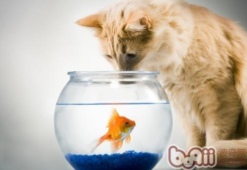 吃鱼的动物有哪些图片