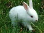 常用治療兔兔皮膚病的藥物