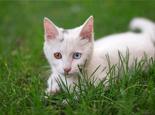 造成猫咪远离你的8大错误行为