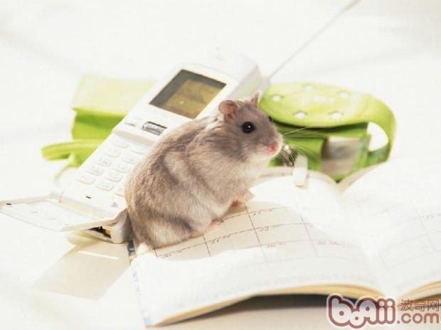 饲养动物成本与乐趣