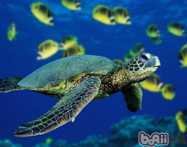 壁纸 海底 海底世界 海洋馆 水族馆 桌面 620_488
