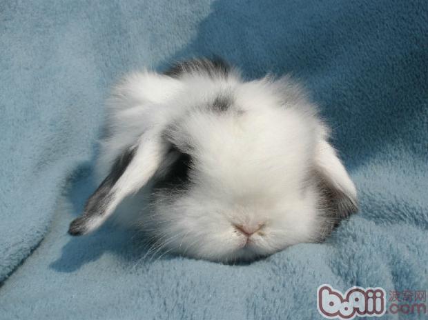 兔兔球虫病的预防和治疗