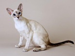 猫咪摇尾巴的三种情况介绍