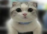 如何留住猫咪美丽毛发?