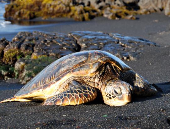 巴西龟应该多久喂一次