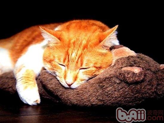 猫咪便秘可进行结肠切除术根治